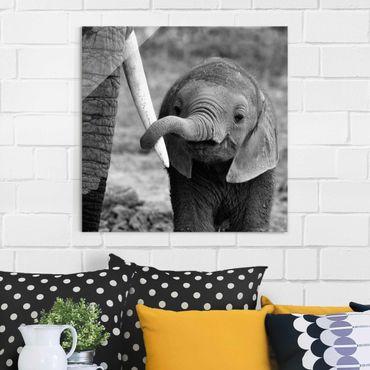Glasbild - Elefantenbaby - Quadrat 1:1