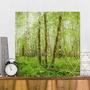 Glasbild - Hoh Rainforest Olympic National Park - Quadrat 1:1
