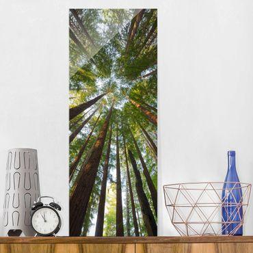 Glasbild - Mammutbaum Baumkronen - Panorama Hoch - Waldbild Glas