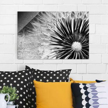 Glasbild - Pusteblume Schwarz & Weiß - Quer 3:2