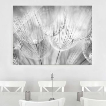 Glasbild - Pusteblumen Makroaufnahme in schwarz weiss - Quer 3:2 - Blumenbild Glas