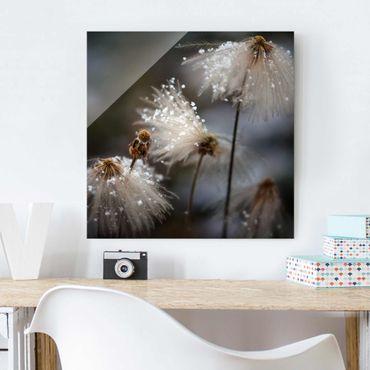 Glasbild - Pusteblumen mit Schneeflocken - Quadrat 1:1