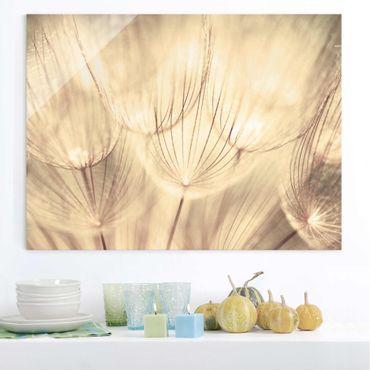 Glasbild - Pusteblumen Nahaufnahme in wohnlicher Sepia Tönung - Quer 3:2 - Blumenbild Glas