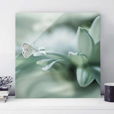 Glasbild - Schmetterling und Tautropfen in Pastellgrün - Quadrat 1:1