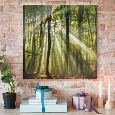 Glasbild - Sonnentag im Wald - Quadrat 1:1