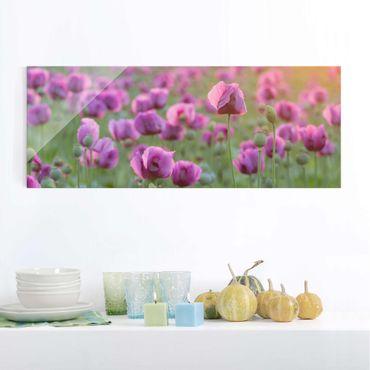 Glasbild - Violette Schlafmohn Blumenwiese im Frühling - Panorama Quer - Blumenbild Glas