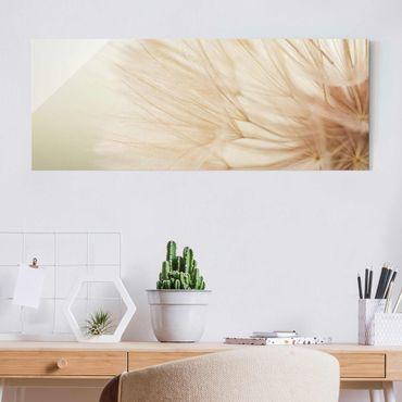 Glasbild - Weiche Pusteblume - Panorama