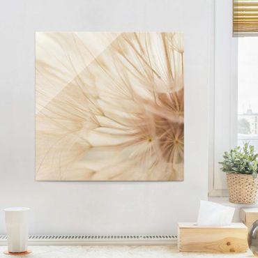 Glasbild - Weiche Pusteblume - Quadrat