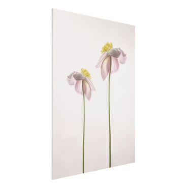 Forex Fine Art Print - Rosa Anemonenblüten - Hochformat 4:3