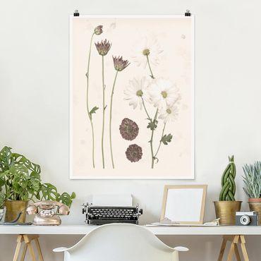 Poster - Herbarium in rosa IV - Hochformat 3:4