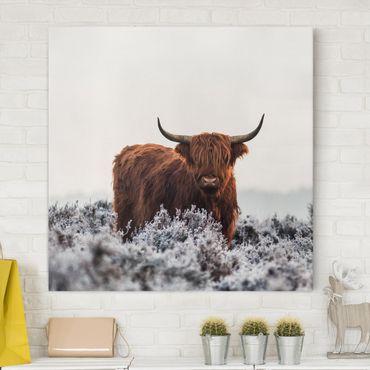 Leinwandbild - Bison in den Highlands - Quadrat 1:1