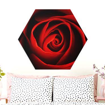Hexagon Bild Forex - Liebliche Rose
