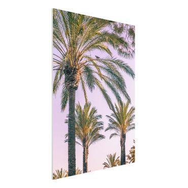 Forex Fine Art Print - Palmen im Sonnenuntergang - Hochformat 4:3
