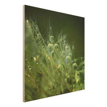Holzbild - Grüne Samen im Regen - Quadrat 1:1