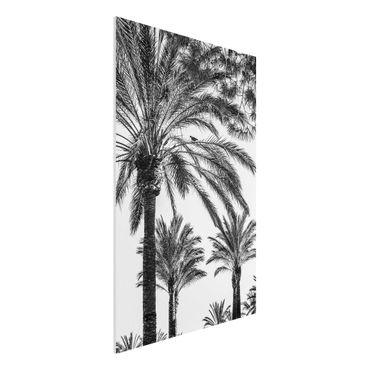 Forex Fine Art Print - Palmen im Sonnenuntergang Schwarz-Weiß - Hochformat 3:2