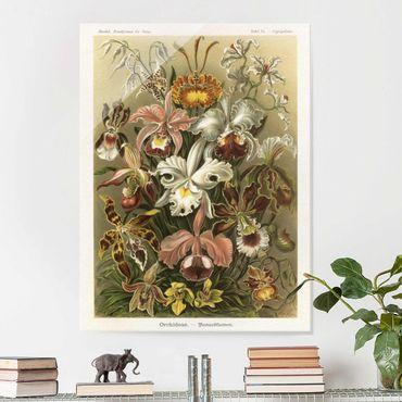 Glasbild - Vintage Lehrtafel Orchidee - Hochformat 4:3