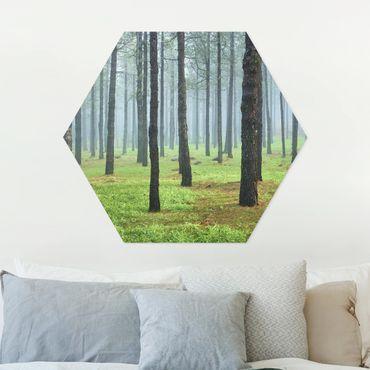 Hexagon Bild Forex - Tiefer Wald mit Kiefern auf La Palma