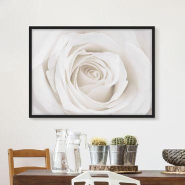 Bild mit Rahmen - Pretty White Rose - Querformat 3:4