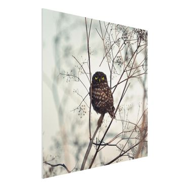 Forex Fine Art Print - Eule im Winter - Quadrat 1:1