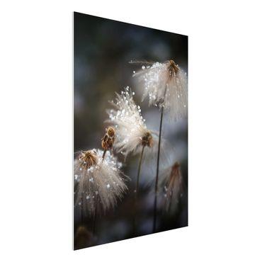 Forex Fine Art Print - Pusteblumen mit Schneeflocken - Hochformat 4:3