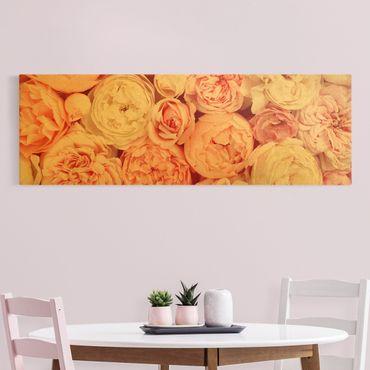 Leinwandbild Gold - Rosen Rosé Koralle Shabby - Panorama 3:1