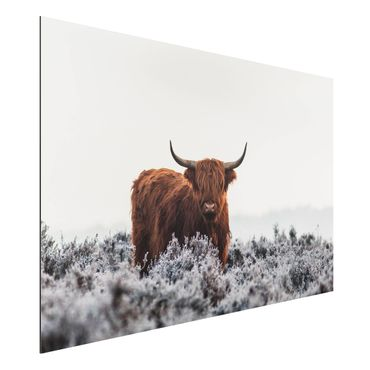 Aluminium Print - Bison in den Highlands - Querformat 2:3