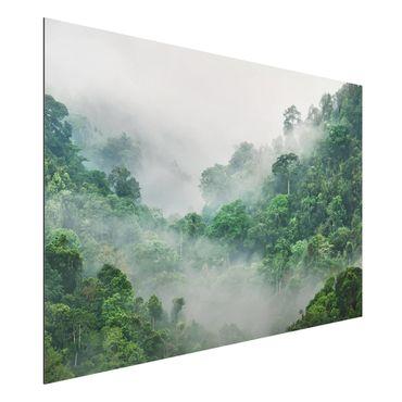 Alu-Dibond Bild - Dschungel im Nebel