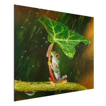 Aluminium Print - Ein Frosch im Regen - Querformat 3:4