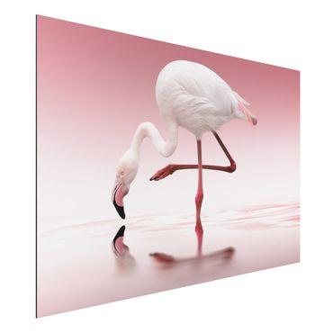 Alu-Dibond Bild - Flamingo Dance