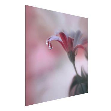 Alu-Dibond Bild - Invisible Touch
