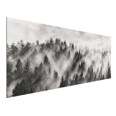 Aluminium Print - Lichtstrahlen im Nadelwald - Panorama
