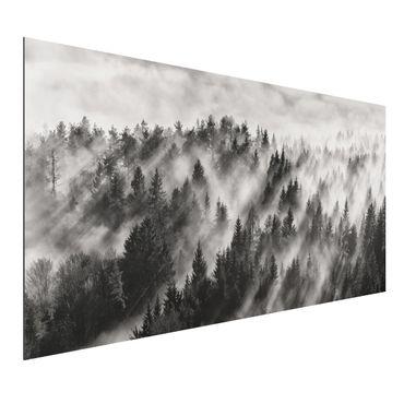 Aluminium Print - Lichtstrahlen im Nadelwald - Querformat 1:2