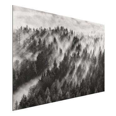 Aluminium Print - Lichtstrahlen im Nadelwald - Querformat 2:3
