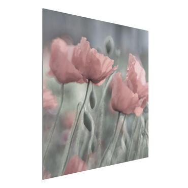 Alu-Dibond Bild - Malerische Mohnblumen