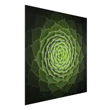 Aluminium Print - Mandala Sukkulente - Quadrat 1:1