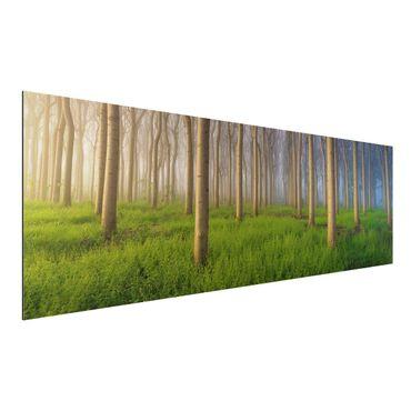 Alu-Dibond Bild - Morgen im Wald