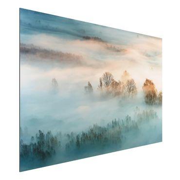 Alu-Dibond Bild - Nebel bei Sonnenaufgang