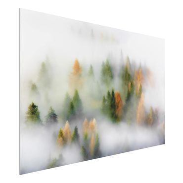 Aluminium Print - Nebelwald im Herbst - Querformat 2:3