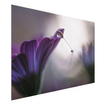 Alu-Dibond Bild - Purple Rain