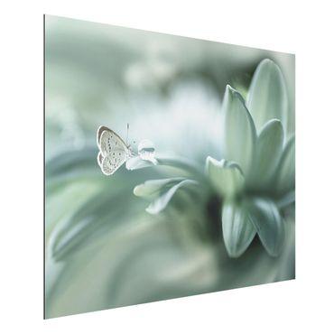 Aluminium Print - Schmetterling und Tautropfen in Pastellgrün - Querformat 3:4