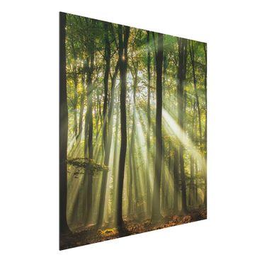 Alu-Dibond Bild - Sonnentag im Wald
