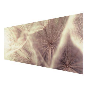Alu-Dibond Bild - Detailreiche Pusteblumen Makroaufnahme mit Vintage Blur Effekt