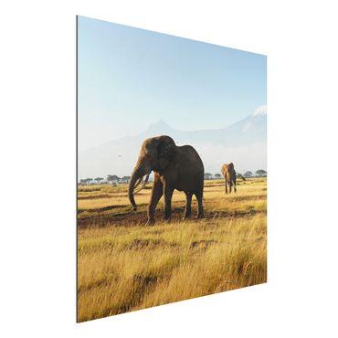 Alu-Dibond Bild - Elefanten vor dem Kilimanjaro in Kenia