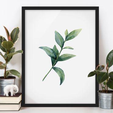 Bild mit Rahmen - Aquarell Eucalyptus II - Hochformat
