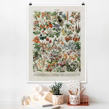 Poster - Vintage Lehrtafel Blumen III - Hochformat 4:3