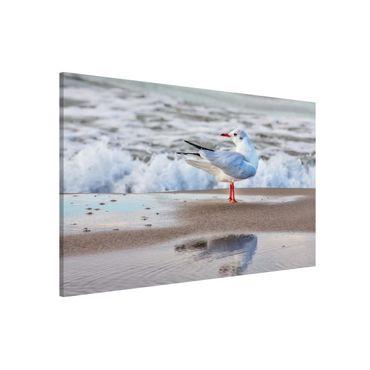 Magnettafel - Möwe am Strand vor Meer - Memoboard Querformat 2:3