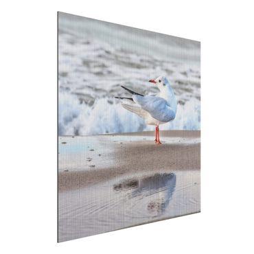 Aluminium Print gebürstet - Möwe am Strand vor Meer - Quadrat 1:1