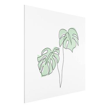 Forex Fine Art Print - Blätter Monstera Line Art - Quadrat 1:1