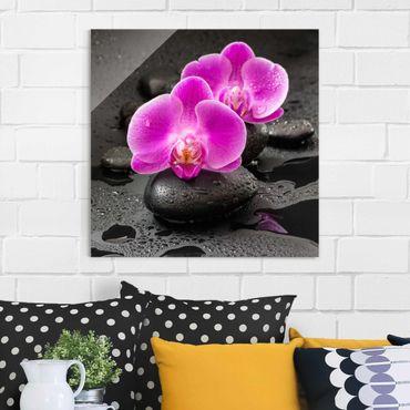 Glasbild - Pinke Orchideenblüten auf Steinen mit Tropfen - Quadrat 1:1