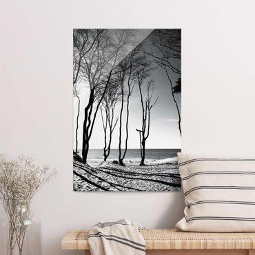 Glasbild - Bäume an der Ostsee - Hochformat